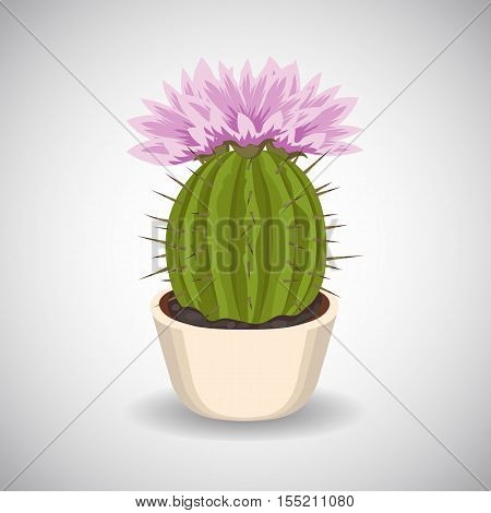 Cactus with beautiful pink flowers in flower pot.