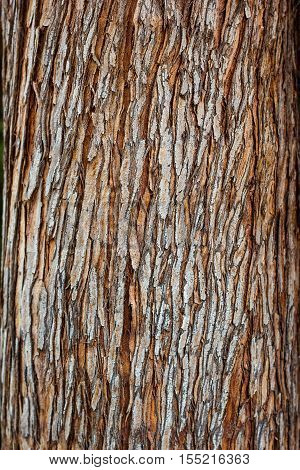 Tree bark texture closeup selective focus. Brown bark wood use as natural background. Old bark. Oak. Ash. Birch. Poplar. Apple tree. Cherry. Moss. Pests. Bark. Protection. Coating. Hornbeam. The slit.