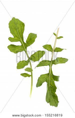 fresh arugula leaves salad on white background