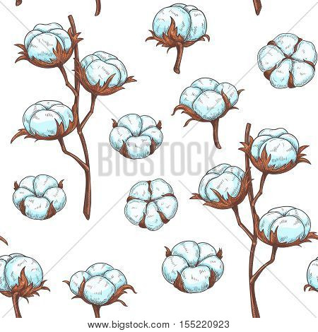 Cotton flowers seamless pattern. Vector illustration in sketch style.