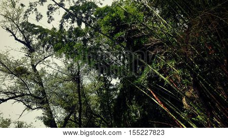 paisaje verde naturaleza sol nubes hojas sombra