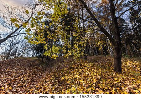 Colorful autumn leaves on tree. Moravian landscape Lysice.