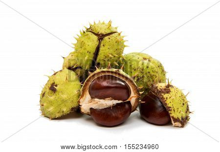 chestnuts nut, objects on a white background