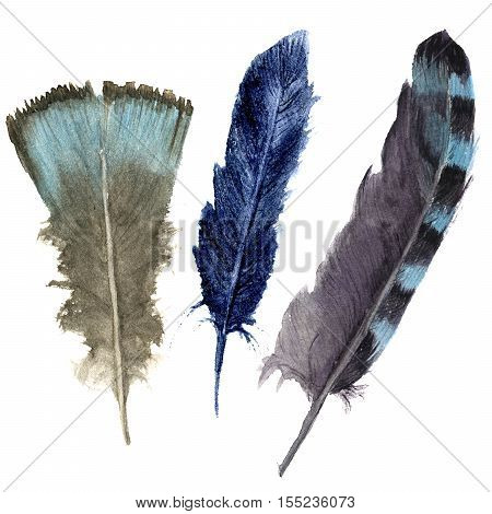 Hand drawn watercolor vibrant feather set. Boho feather style. illustration feather. isolated on white. Bird feather fly design for T-shirt, invitation, wedding card.Rustic feather. Bright color