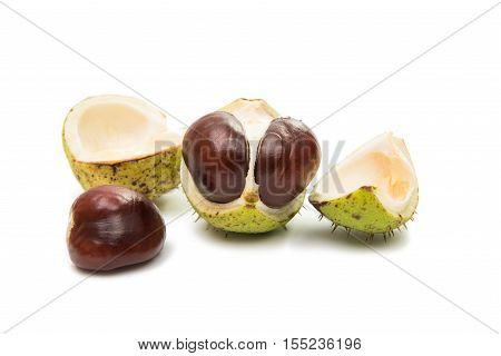 green, horse-chestnut, chestnuts on a white background