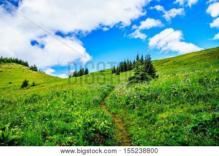 Hiking through the mountain alpine meadows with wild Flowers on Tod Mountain in the Shuswap Highlands of British Columbia, Canada