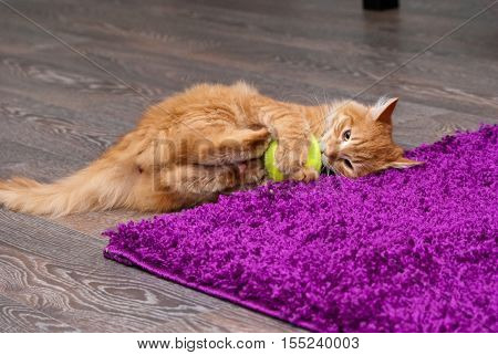 beautiful fluffy little ginger kitten playing with a ball