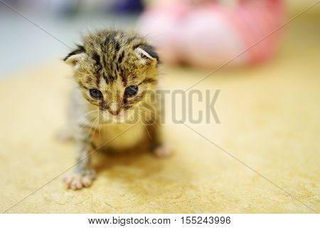 Cute little orphan kitten at home on a floor