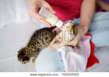 Feeding Orphan Kitten With Milk Replacement