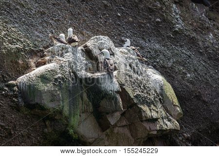 gulls on a rock on a sunny day