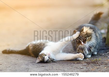 Two playful cats on warm spring day