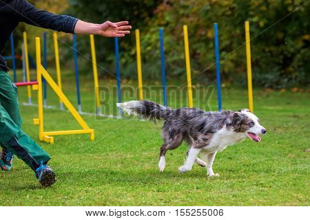 Man And Dog On An Agility Course