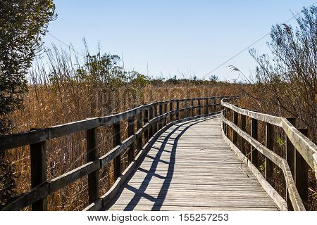 Footpath through reeds at Back Bay National Wildlife Refuge in Virginia Beach, Virginia.