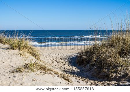 Sandbridge Beach in Virginia Beach, Virginia with beach grass on dunes and ocean background.