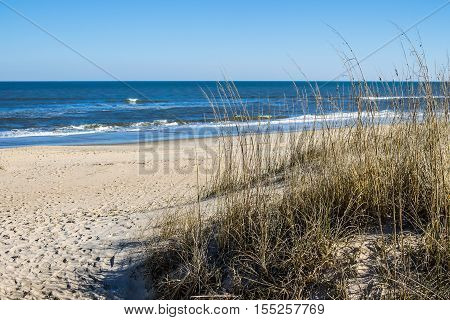 Sandbridge Beach in Virginia Beach, Virginia with beach grass, ocean and waves.