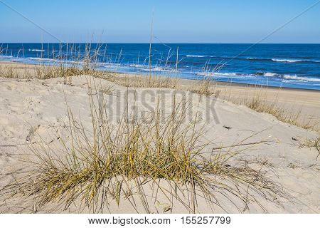 Grass on Sandbridge Beach in Virginia Beach, Virginia with ocean and waves in the background.
