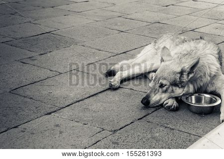 Old dog lying down in the city square - Black and white editing -  Vintage filter - Soft focus on dog's face