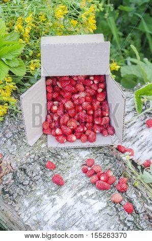 Paper Box With Fresh Wild Strawberries