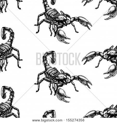 Hand drawn seamless pattern with scorpion. Retro realistic animal background. Doodle line graphic design. Black and white drawing scorpion. Vector illustration.