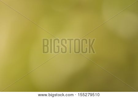nature blurred background or green tone abstact