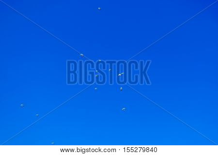 Paratroopers descend to earth on the blue clear sky background.