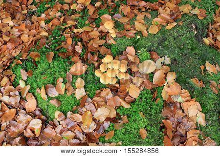 paddenstoelen op de grond tussen de bladeren