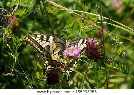 butterfly, transformation, flower, nature, monarch, green, cocoon, garden