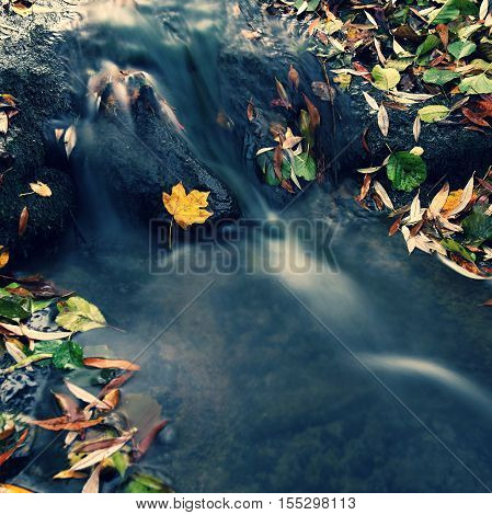 Beautiful autumn nature with a stream. Autumn leaves. Natural seasonal colored background