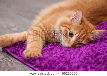 beautiful little fluffy kitten lying on a carpet