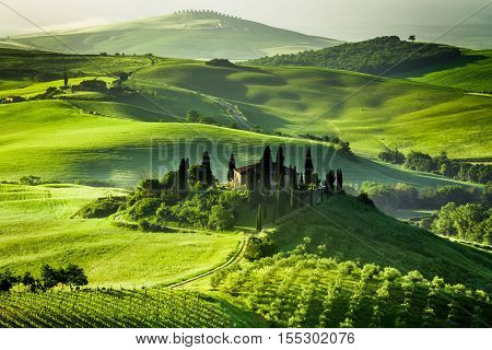 Farm of olive groves and vineyards in summer