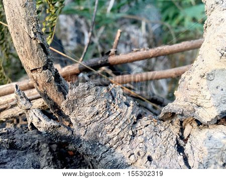 Bark background tree, plant, wood, arbor, woods, arbour