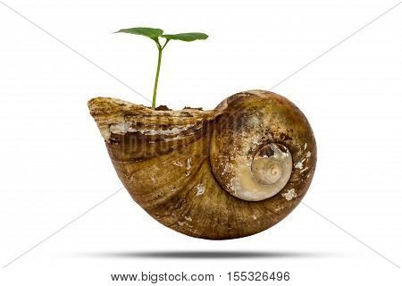 Young Green Plant Grow In Old Shellfish