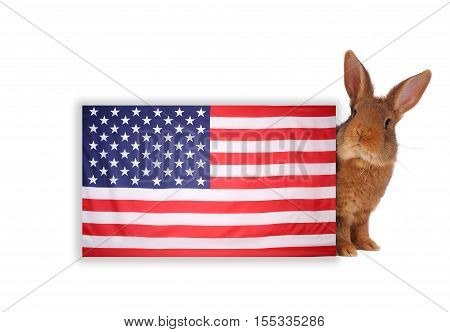 rabbit with the American flag