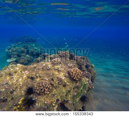 Deep sea and coral reef landscape. Coral reef animals. Sea ecosystem. Fresh corals at the bottom of the sea. Oceanic view from underwater. Seashore diving or snorkeling. Deep blue water lagoon