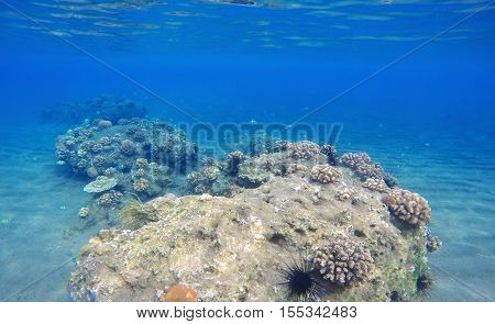 Deep sea and coral reef landscape. Coral reef animals. Sea ecosystem. Fresh corals at the bottom of the sea. Oceanic view from underwater. Seashore diving or snorkeling. Beautiful tropical nature