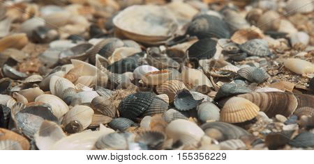 Little sea shells and stones on sand. Beach sand with sea shells. Close up of small sea shells on sand on beach. Sea coast closeup. Sand background. Seashells on sand.