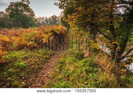 Autumn Leaves along the River South Tyne, on a riverside trail through woodland, at Warden in Northumberland