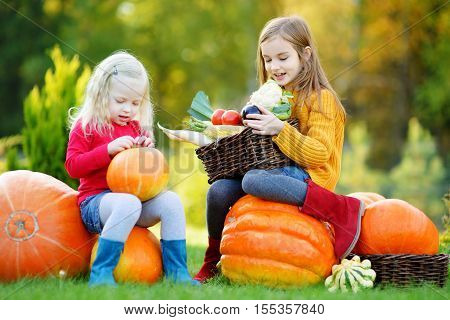 Two Pretty Little Sisters Having Fun Together On A Pumpkin Patch