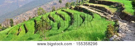Terraced field in the Himalayas Hi-res panorama