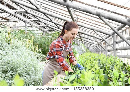 Pretty young gardener looking after decorative plant in greenhouse