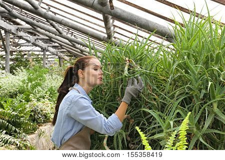 Pretty young gardener looking after aloe in greenhouse