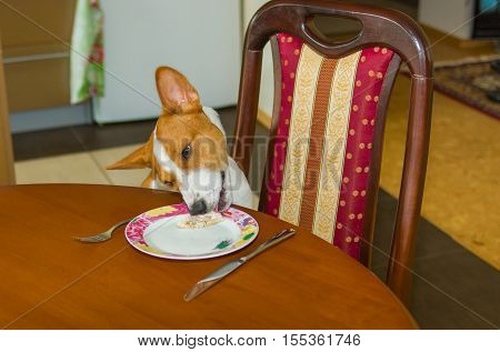 Dog stealing food - home work of bad-mannered pets.