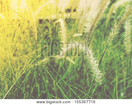 Close up grass flower. Soft style with vintage filter effect