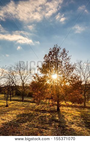 Sunny Autumnal Evening Landscape With Colorful Trees