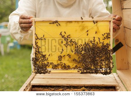 Beekeeper controlling beeyard and bees. Beekeeping honeycomb.