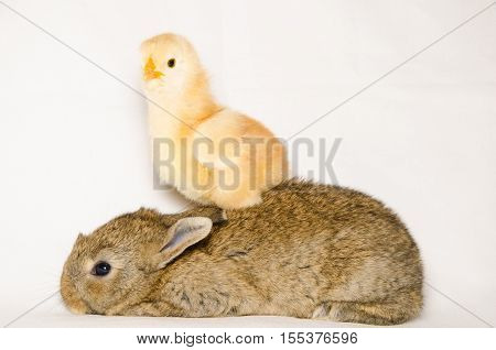 Portrait of funny animals isolated on white background
