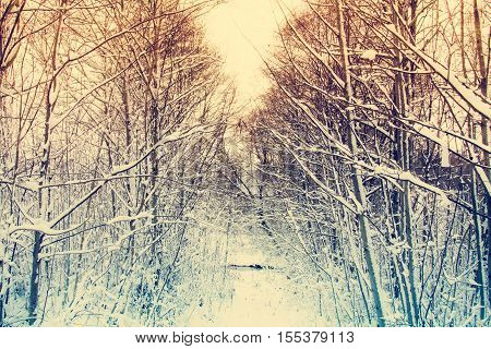 Some snow is on the ground and trees are covered with snow. Image has a vintage tone effect.