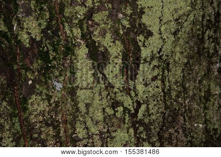 old wood tree bark texture with green moss tree bark bark photo bark background bark macro forest tree tree texture bark texture