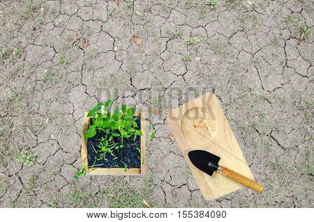 Planting seedlings in the world. To encourage the planting of trees. reduce global warming The seedling is a good start for our world to increase forest. For a balanced environment