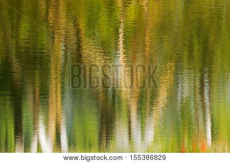 Beautiful reflection of trees on water green environmental background horizontal image artistic colored impression. Kolkata Calcuatta West Bengal India